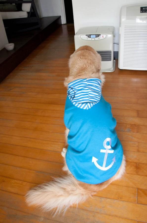 怕冷小水手