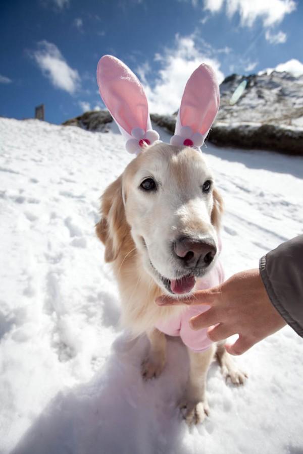 雪地粉紅兔