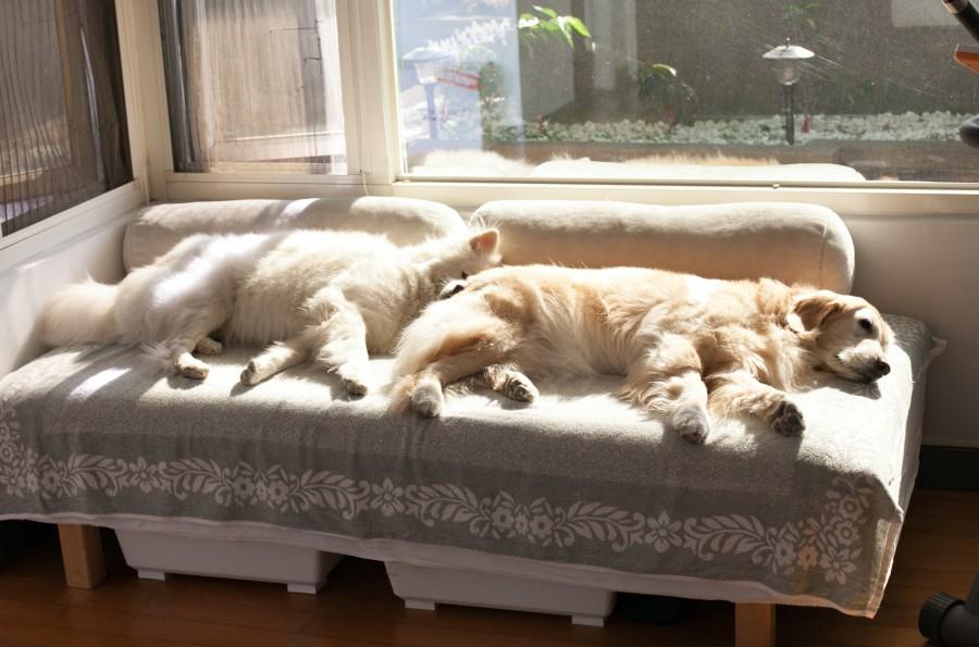 太陽暖呼呼