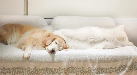 三個白抱枕?